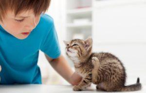 Как избавить котенка от блох: лечение и профилактика. Диагностика заражения котёнка блохами: симптомы и первая помощь